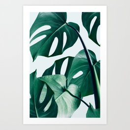 Monstera Tropical Photography Digital Art, Minimal Nature Jungle Botanical Leaves Kunstdrucke