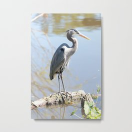 Lovely Great Blue Heron Metal Print