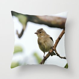 Young Chaffinch Songbird Bird Perching on a Branch - Wales, UK Throw Pillow