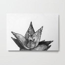 Nature aloe Metal Print