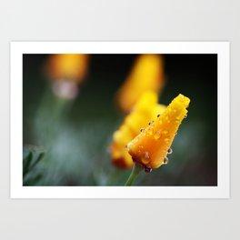 Rainshower Art Print