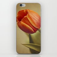 tulip iPhone & iPod Skins featuring Tulip by Lawson Images