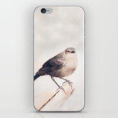 Little Capitola Bird iPhone & iPod Skin