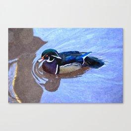 Wood Duck - Aix Sponsa Canvas Print