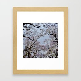 Jacarandas 01 Framed Art Print