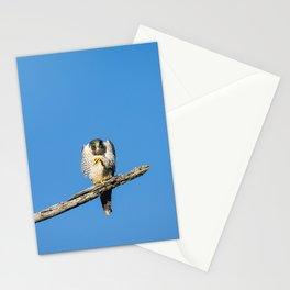 A Grumpy Peregine Falcon Stationery Cards
