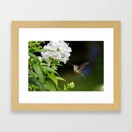 Hummingbird and Flowers Framed Art Print
