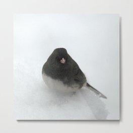 Snow Bird (Dark-eyed Junco) Metal Print
