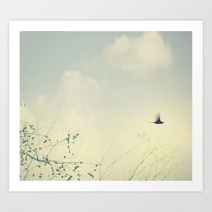 Cardinale Flight Art Print