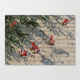 Red Summer Trumpets Canvas Print
