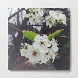 Spring Blooms Metal Print
