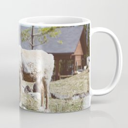 Caribou (Montreal, Canada) Coffee Mug