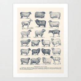 Types of Sheep Art Print