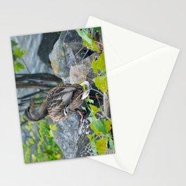 Duck on the Rocks (Common Mallard) Stationery Cards