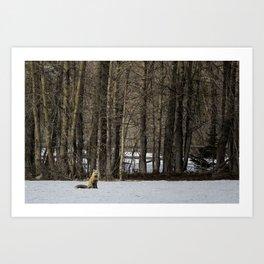 Beautiful Red Fox, No. 2 Art Print