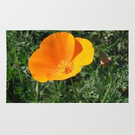 Golden Beauty. California Poppy. © J. Montague. Rug