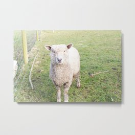 Ba Ba Not a Black Sheep Metal Print