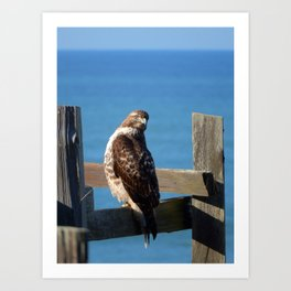Hello Hawk Art Print