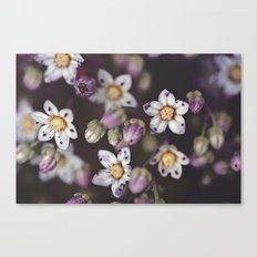 Dainty Little Things Canvas Print