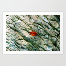 Rebellious Red Leaf Art Print