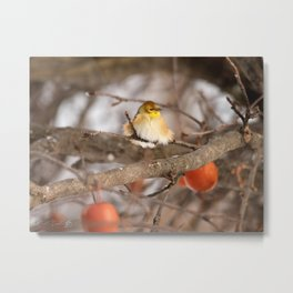 American Goldfinch in Winter Metal Print