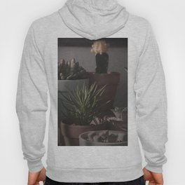 A group  of succulent plants Hoody