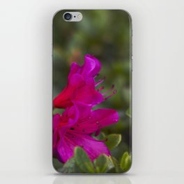 wonderpink iPhone Skin