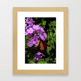 Fluttering By Framed Art Print