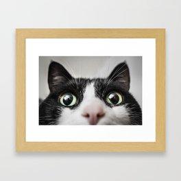 Funny Cat Framed Art Print