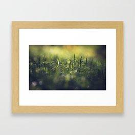Moss; Polytrichum commune. In norwegian; Bjørnemose Framed Art Print