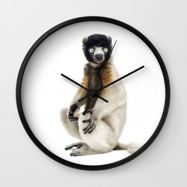 One year old Crowned Sifaka Wall Clock