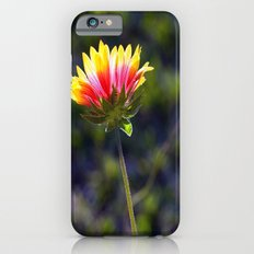Sun-soaked iPhone 6s Slim Case