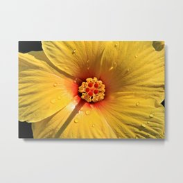 Buttery Yellow Hibiscus Metal Print
