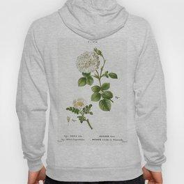1 White rose of York Rosa alba 2 Burnet rose Rosa pimpinellifolia from Traite des Arbres et Arbustes Hoody