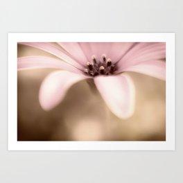 Pure Sweetness a single daisy Art Print
