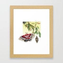 Columbian Silk Moth Cycle Framed Art Print