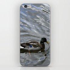 Mallard iPhone & iPod Skin