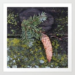 Pine Cone on Weathered Wood Art Print