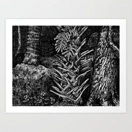 Cabbage Palm w/Fern & Oak Art Print