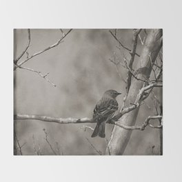 The Quest:  Black and White Bird Antiqued Throw Blanket
