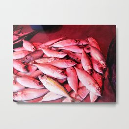 Catch of the Day #3 – Sri Lanka Metal Print