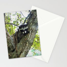 Baby Raccoon on a tree Stationery Cards
