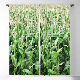 Corn -  Maize -  Crop -  Grow -  Agriculture -  Grain -  Food - Vintage illustration. Retro décor. Blackout Curtain