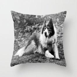 greenland dog Throw Pillow