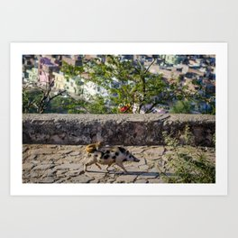 A Monkey Riding a Pig in India Art Print