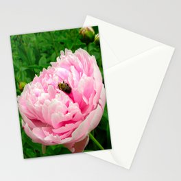 Bumble Bee on a Pink Peony Stationery Cards
