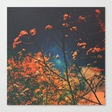 Days Go By Canvas Print