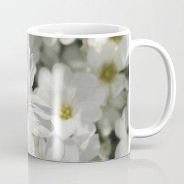 Reach For the Sun - Snow in Summer, Dusty Miller Coffee Mug