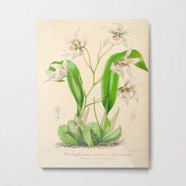 Odontoglossum Orchid Vintage Botanical Floral Flower Plant Scientific Illustration Metal Print