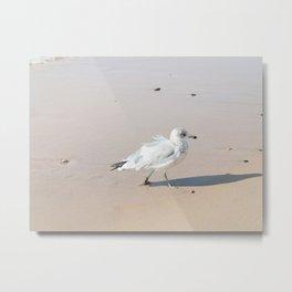 Juvenile Herring Gull Metal Print